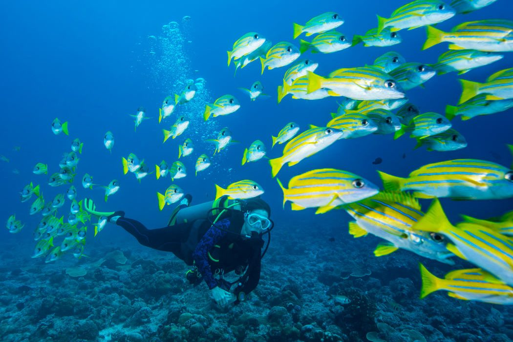 Why scuba diving is the best sport fish