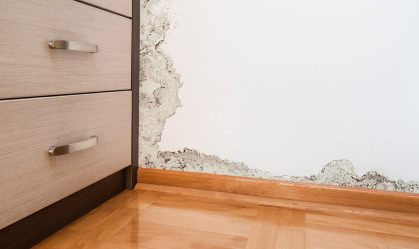 Prevent Mold Problems after a Flood