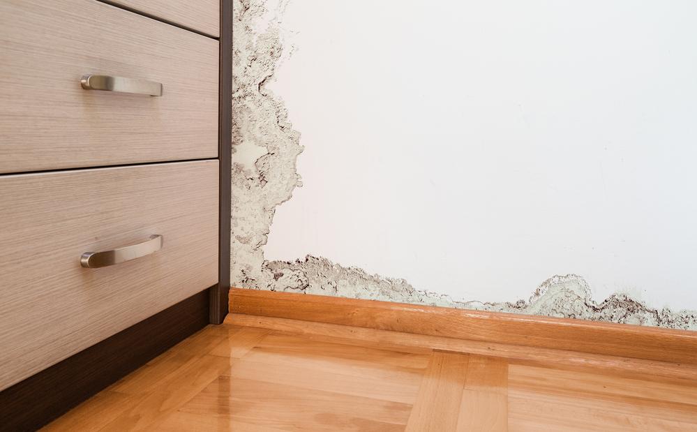 Prevent Mold Problems after a Flood