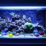 The Different Types of Coral for Reef Tanks: A Helpful Guide