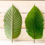 3 Surprising Health Benefits of Kratom